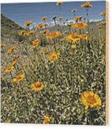 Bush Sunflowers Grow On Arid Slope Wood Print