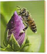 Busy Bee 2 Wood Print