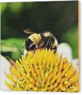 Busy Bee Collecting On Echinacea Pow Wow Wood Print