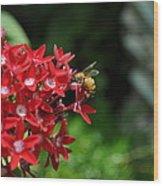 Busy Bee Wood Print