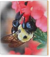 Busy Bee Wood Print by Maureen  McDonald