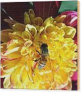 Busy Bee On Yellow Flower Wood Print