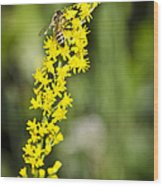 Busy Bee On Yellow Wildflower Wood Print