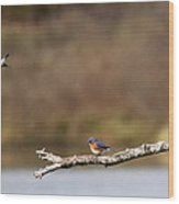 Busy Bluebirds - Three Overlooking The Lake Wood Print