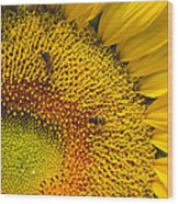 Busy Sunflower Wood Print