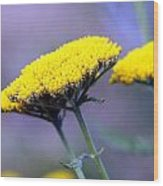Butter Weeds Wood Print