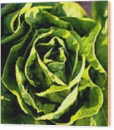 Buttercrunch Lettuce From Above Wood Print