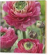 Buttercup Ranunculus Sp Mirabelle Vert Wood Print