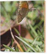 Butterflied Wood Print