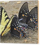Butterflies By The Buches Wood Print