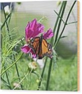 Butterflies Fly Wood Print