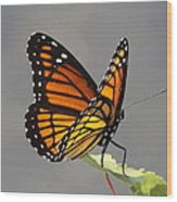 Butterfly - Sitting On The Green Wood Print