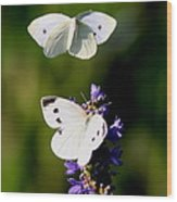 Butterfly - Visiting Wood Print