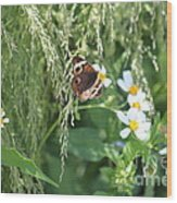 Butterfly 11 Wood Print