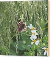 Butterfly 13 Wood Print