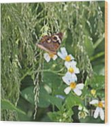 Butterfly 15 Wood Print