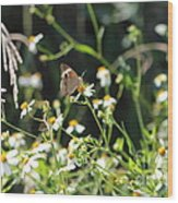 Butterfly 17 Wood Print