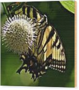 Butterfly 2 Wood Print