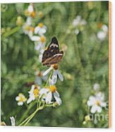 Butterfly 23 Wood Print