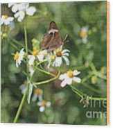 Butterfly 24 Wood Print