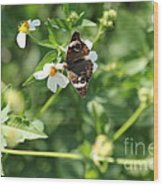 Butterfly 25 Wood Print