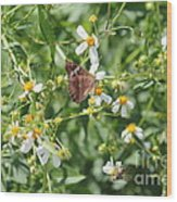 Butterfly 30 Wood Print