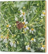 Butterfly 31 Wood Print