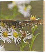 Butterfly 3319 Wood Print