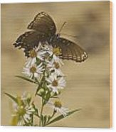 Butterfly 3321 Wood Print