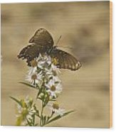 Butterfly 3322 Wood Print