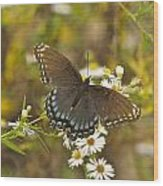 Butterfly 3325 Wood Print
