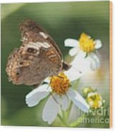 Butterfly 39 Wood Print