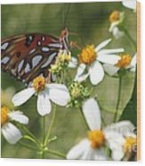Butterfly 41 Wood Print