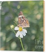 Butterfly 42 Wood Print