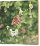 Butterfly 46 Wood Print
