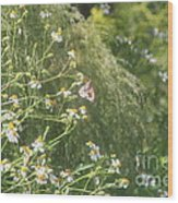 Butterfly 49 Wood Print