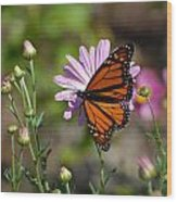 Butterfly 89 Wood Print