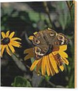 Butterfly 90 Wood Print