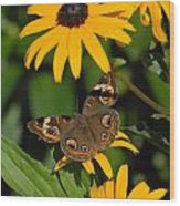 Butterfly 94 Wood Print
