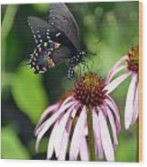 Butterfly And Coine Flower Wood Print