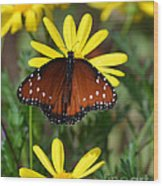 Butterfly And Yellow Flowers Wood Print