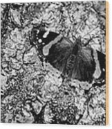 Butterfly Bark Black And White Wood Print