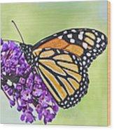 Butterfly Beauty-monarch Wood Print