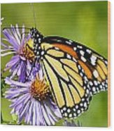 Butterfly Blessing Wood Print