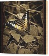 Butterfly Brown Wood Print