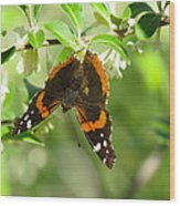 Butterfly Buds Wood Print