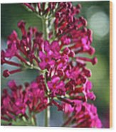 Butterfly Bush Wood Print