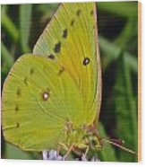 Butterfly Collection Macro Wood Print