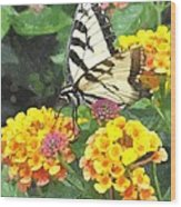 Butterfly Dining Bdwc Wood Print