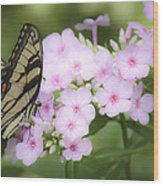 Butterfly Dreams Wood Print